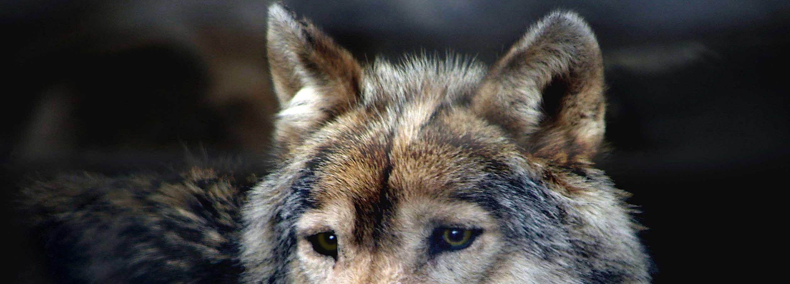 Exceptionnel Il principe dei lupi | Mangialibri BF49